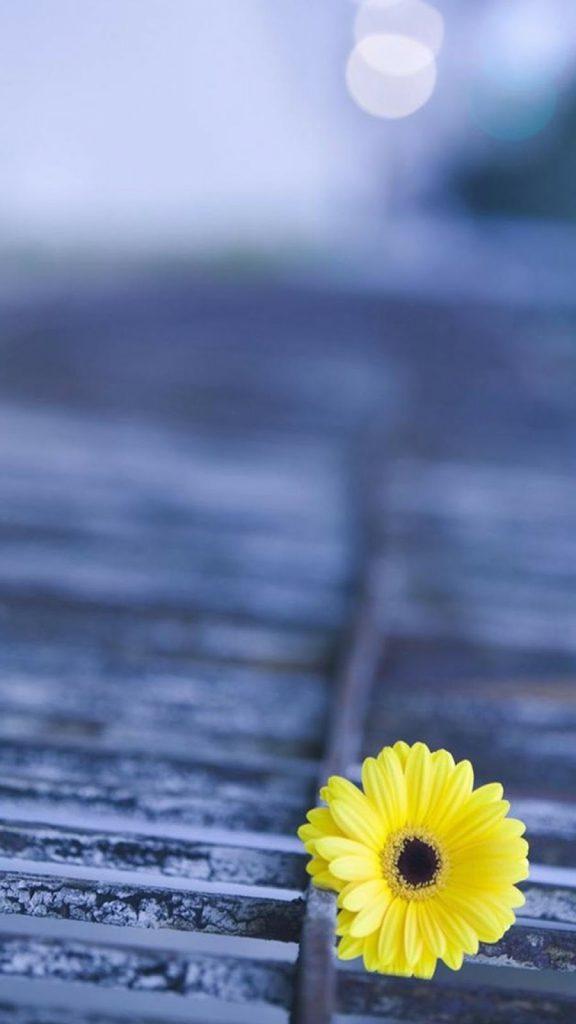 Hình nền điện thoại hoa đẹp