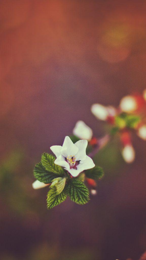 Hình nền điện thoại về hoa đẹp
