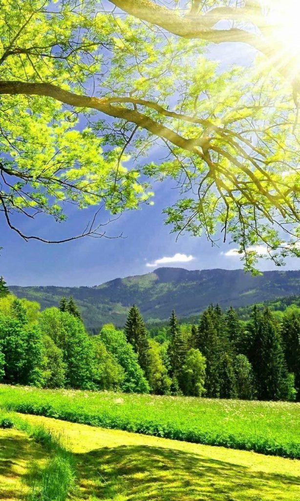 Hình nền điện thoại rừng cây xanh đẹp